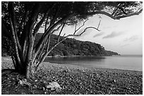 Great Lameshur Bay beach. Virgin Islands National Park ( black and white)