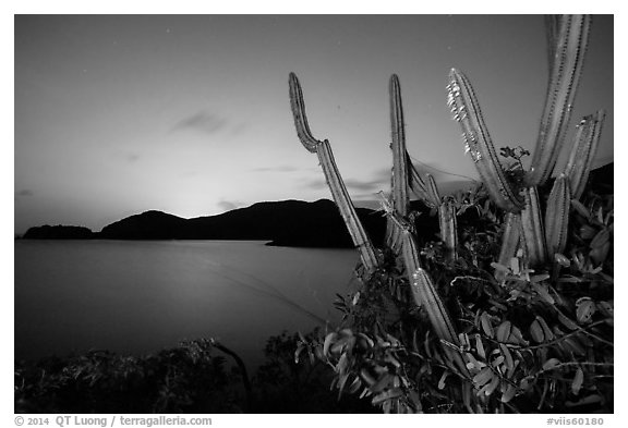 Cactus from Yawzi Point at sunset. Virgin Islands National Park (black and white)