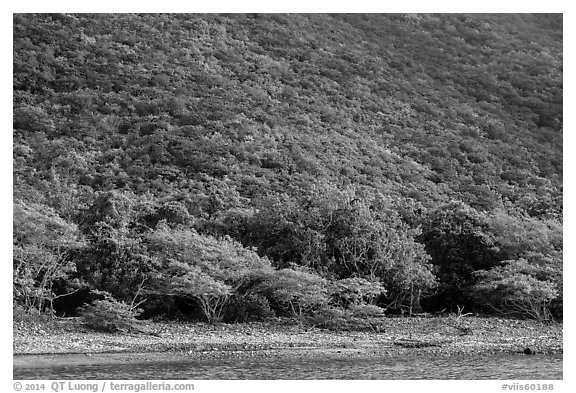 Steep green hillside above Great Lameshur beach. Virgin Islands National Park (black and white)