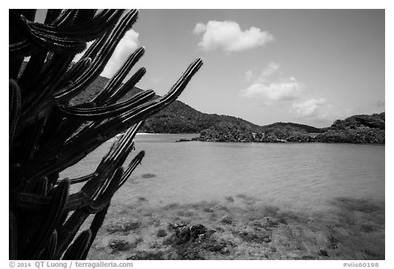 Cactus and Trunk Cay, Trunk Bay. Virgin Islands National Park (black and white)