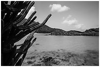 Cactus and Trunk Cay, Trunk Bay. Virgin Islands National Park ( black and white)