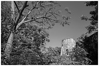 Tower framed by Royal Poinciana tree, Annaberg Sugar Mill ruins. Virgin Islands National Park ( black and white)