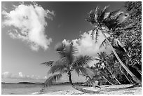 Salomon Beach. Virgin Islands National Park ( black and white)