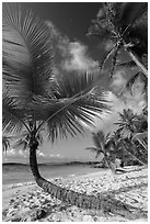 Tropical beach with palm trees, Salomon Bay. Virgin Islands National Park ( black and white)