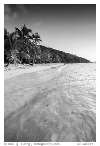 Tropical beach in the evening, Salomon Bay. Virgin Islands National Park (black and white)