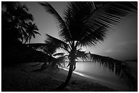 Palm tree and lights of St Thomas, Salomon Beach. Virgin Islands National Park ( black and white)