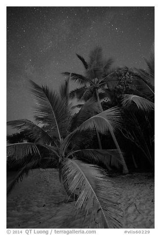 Palm trees and starry sky, Salomon Beach. Virgin Islands National Park (black and white)