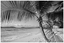 Palm tree framing beach, Salomon Bay. Virgin Islands National Park ( black and white)