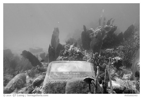 Soft coral, Trunk Bay underwater trail interpretive sign. Virgin Islands National Park (black and white)