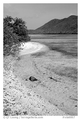 Sandy shoreline, Leinster Bay. Virgin Islands National Park (black and white)