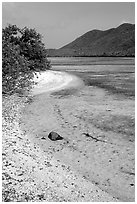 Sandy shoreline, Leinster Bay. Virgin Islands National Park ( black and white)