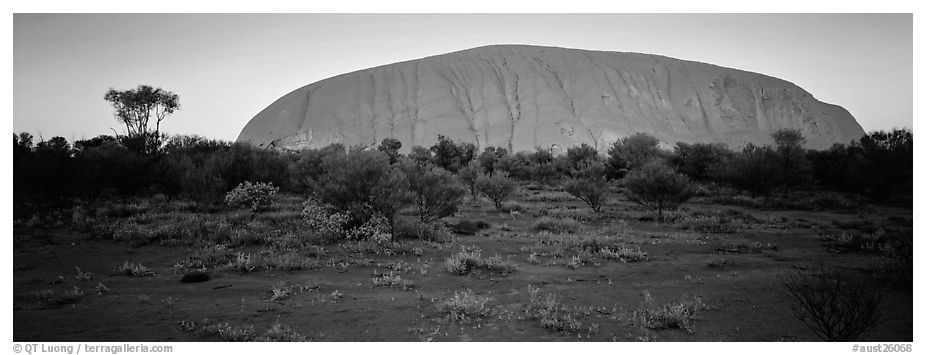 Ayers rock with sunrise glow. Uluru-Kata Tjuta National Park, Northern Territories, Australia (black and white)