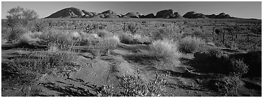 Outback landscape, Olgas. Olgas, Uluru-Kata Tjuta National Park, Northern Territories, Australia (Panoramic black and white)