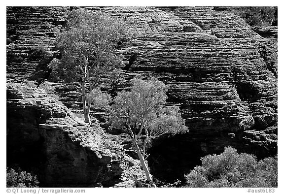 Trees and rock wall in Kings Canyon,  Watarrka National Park. Northern Territories, Australia (black and white)