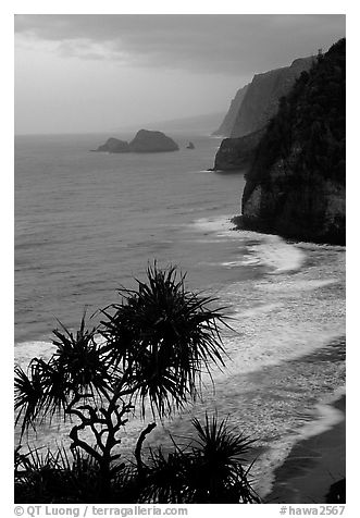 Untamed coast of the North shore from Polulu Valley overlook, dusk. Big Island, Hawaii, USA (black and white)