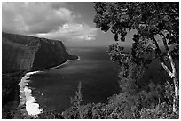 Tree and coastline above Waipio Valley. Big Island, Hawaii, USA (black and white)