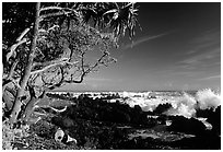 Trees and surf, Keanae Peninsula. Maui, Hawaii, USA (black and white)