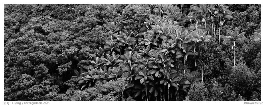 Landscape with tropical vegetation. Big Island, Hawaii, USA (black and white)
