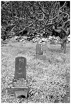 Historic Japanese cemetery in Hana. Maui, Hawaii, USA ( black and white)
