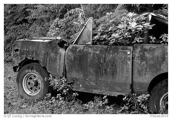 Wrecked truck invaded by flowers. Maui, Hawaii, USA (black and white)