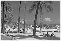 Beach scene with palm trees. Waikiki, Honolulu, Oahu island, Hawaii, USA (black and white)