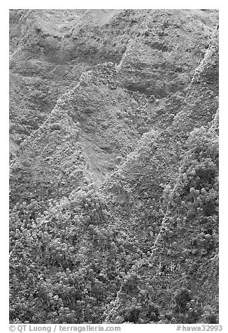 Ridges on pali. Oahu island, Hawaii, USA (black and white)