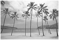 Palm trees and deserted beach, Hanauma Bay. Oahu island, Hawaii, USA (black and white)