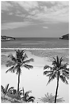 Palm trees and beach with no people, Hanauma Bay. Oahu island, Hawaii, USA (black and white)