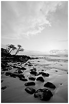 Windblown trees, boulders, and clouds, Lydgate Park, sunrise. Kauai island, Hawaii, USA ( black and white)