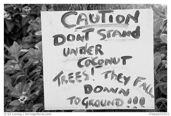 Hand written sign cautioning against falling coconut. Kauai island, Hawaii, USA (black and white)