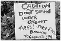 Hand written sign cautioning against falling coconut. Kauai island, Hawaii, USA ( black and white)