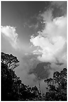 Trees and clouds, Kalalau lookout, late afternoon. Kauai island, Hawaii, USA ( black and white)