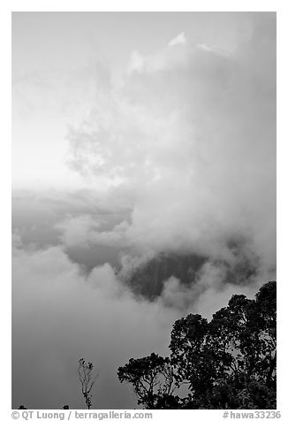 Trees and clouds, Kalalau lookout, sunset. Kauai island, Hawaii, USA (black and white)