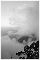 Trees and clouds, Kalalau lookout, sunset. Kauai island, Hawaii, USA ( black and white)