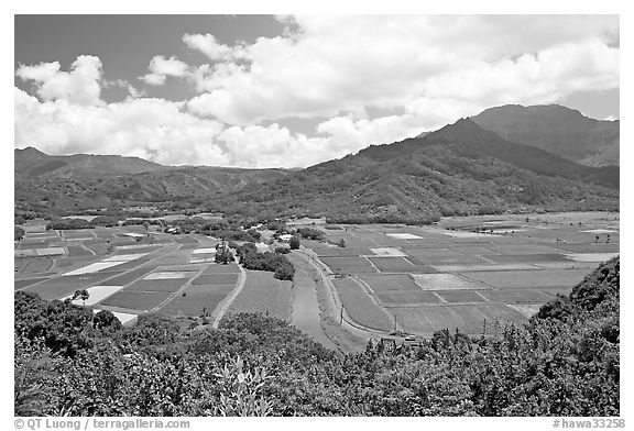 Hanalei Valley with patchwork taro fields,  mid-day. Kauai island, Hawaii, USA (black and white)