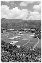 Patchwork of taro fields seen from Hanalei Lookout, mid-day. Kauai island, Hawaii, USA (black and white)