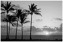 Coconut trees, Kapaa, sunrise. Kauai island, Hawaii, USA (black and white)