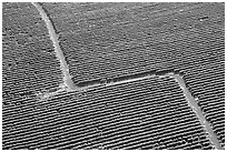 Aerial view of coffee plantations. Kauai island, Hawaii, USA (black and white)