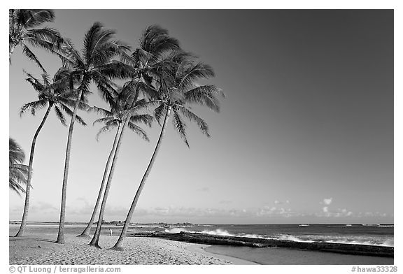 Black and white picture photo palm trees and beach salt pond beach late afternoon kauai island hawaii usa