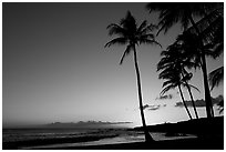 Palm trees and beach, Salt Pond Beach, sunset. Kauai island, Hawaii, USA ( black and white)