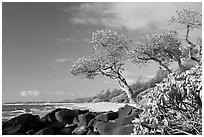 Boulders, trees, and beach, Lydgate Park, early morning. Kauai island, Hawaii, USA ( black and white)