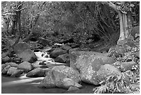 Stream, Haena beach park. North shore, Kauai island, Hawaii, USA (black and white)