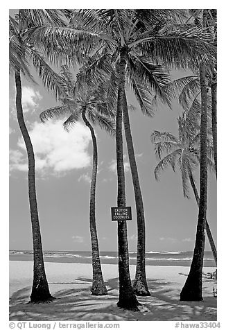 Coconut trees, with warning sign, Salt Pond Beach. Kauai island, Hawaii, USA (black and white)