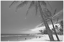 Coconut trees and Salt Pond Beach, mid-day. Kauai island, Hawaii, USA (black and white)
