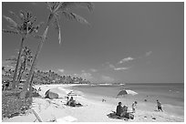 Sun unbrellas and palm trees, mid-day, Poipu Beach. Kauai island, Hawaii, USA (black and white)