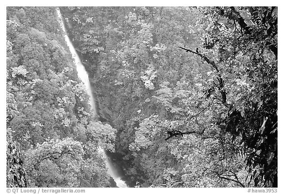 Kahuna Falls. Akaka Falls State Park, Big Island, Hawaii, USA (black and white)