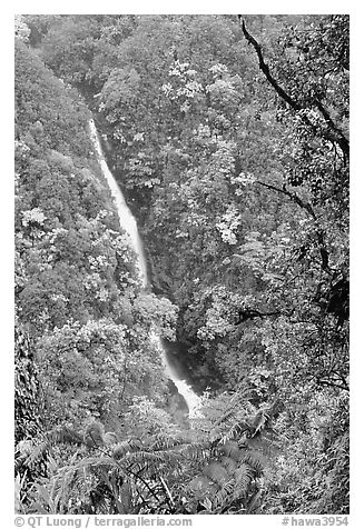 Kahuna Falls (400 feet high). Akaka Falls State Park, Big Island, Hawaii, USA (black and white)