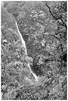 Kahuna Falls (400 feet high). Akaka Falls State Park, Big Island, Hawaii, USA ( black and white)