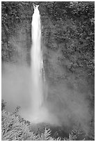 Akaka Falls on Kolekole stream. Akaka Falls State Park, Big Island, Hawaii, USA ( black and white)