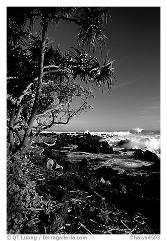 Trees and waves, Keanae Peninsula. Maui, Hawaii, USA (black and white)